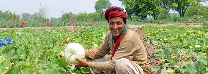 Getting value for money: Creating an automated market place for farmers in Pakistan